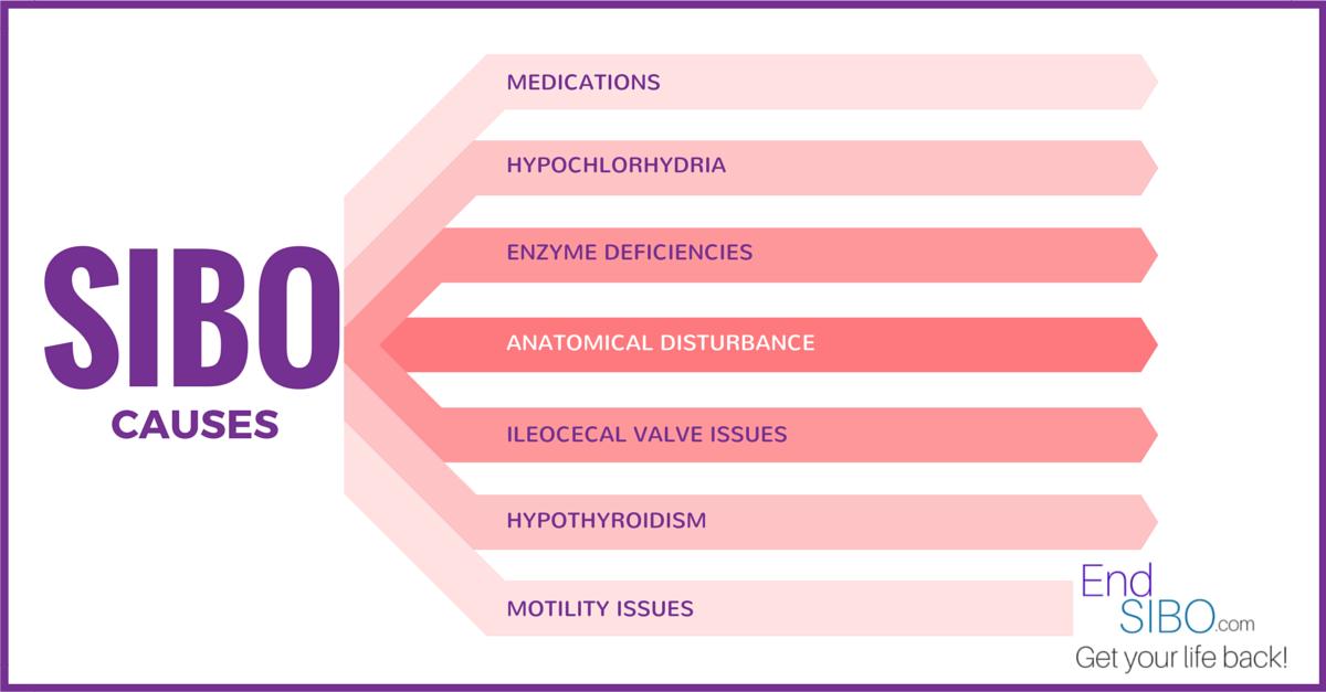 What Causes SIBO? – End SIBO